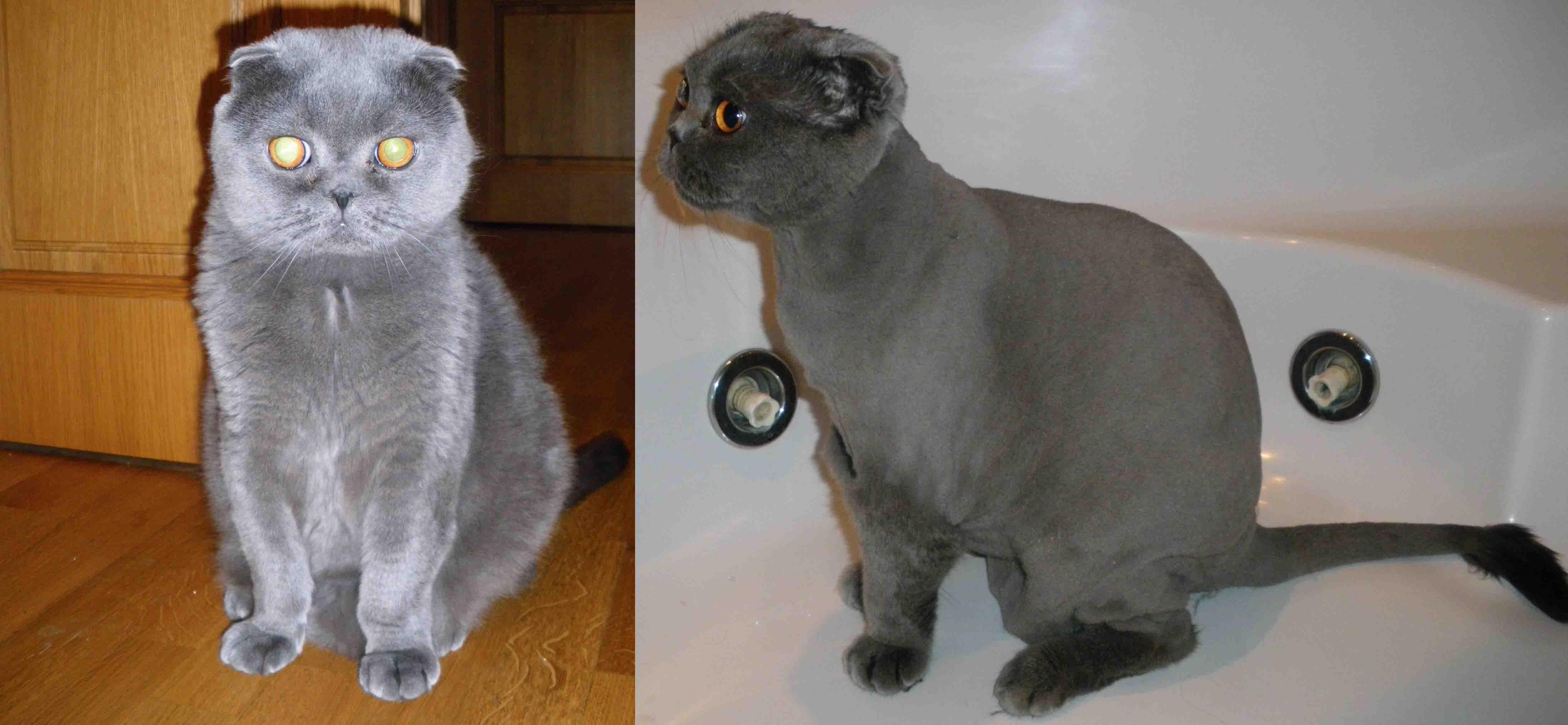 Стриженные кошки